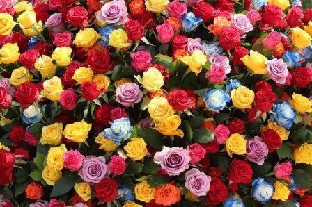 С 28 по 30 августа в Петербурге в четырнадцатый раз пройдет один из самых ярких и красивых праздников года – Фестиваль цветов.