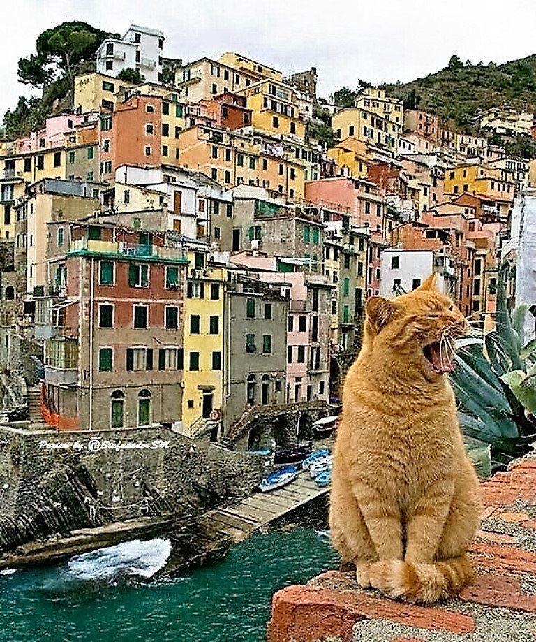 Коты Италии
